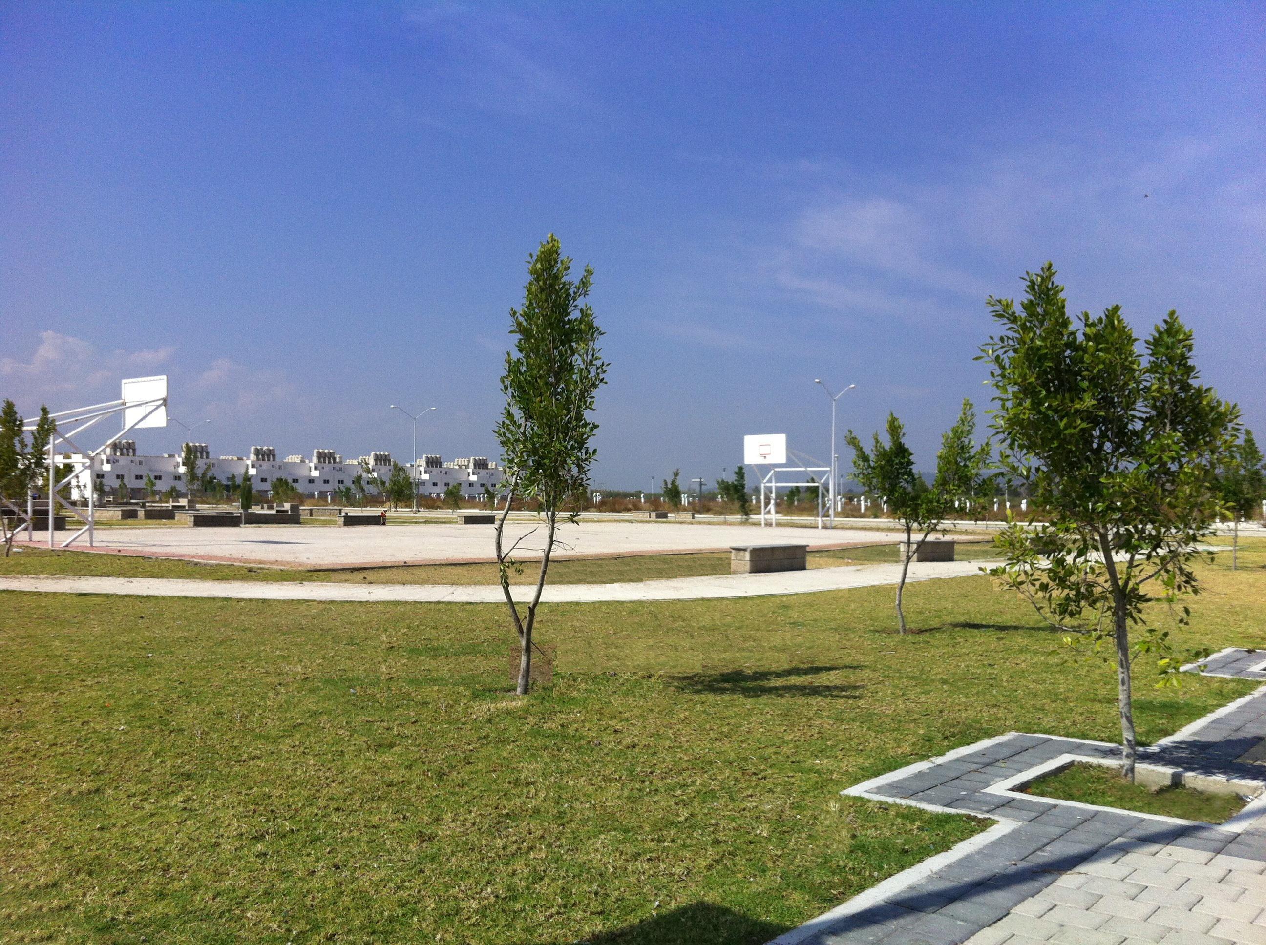 acacias (2)